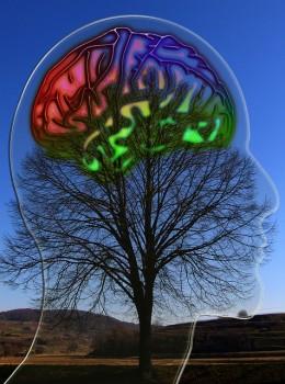 Serotonin in the Brain Visualized