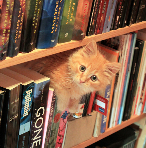 Image result for book and cat