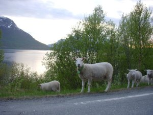 These Norwegians are feeling pretty sheepish about Russia's advances in the Arctic. PC: Eddie Grove
