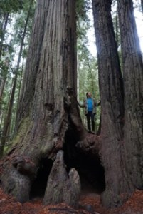 Redwood Forest Photo by Daniel Lee