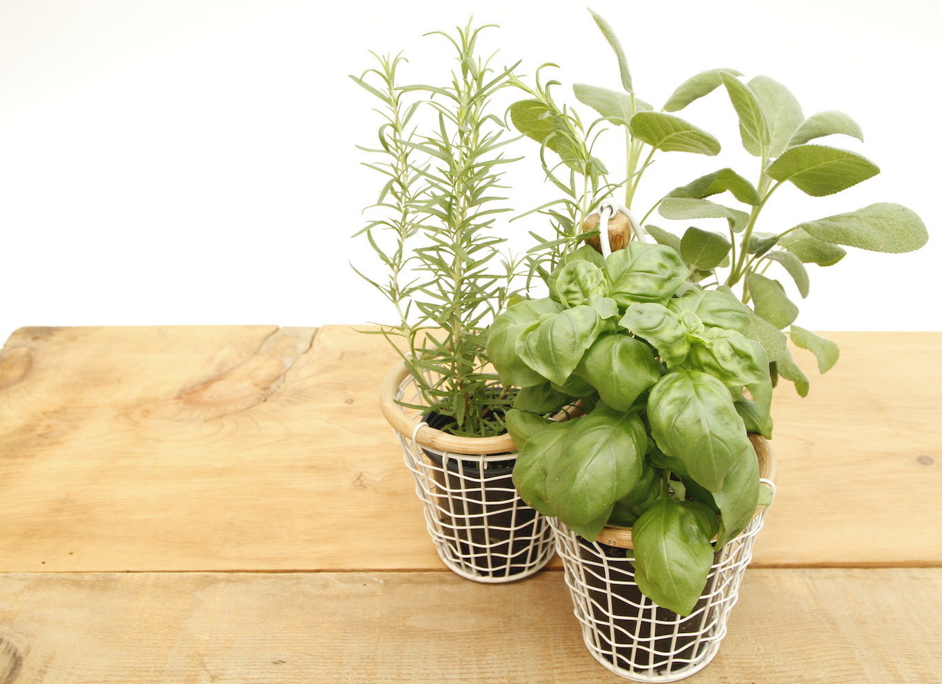 Trio of herbs