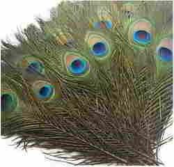 Piokio 200 pcs Natural Peacock Feathers in Bulk