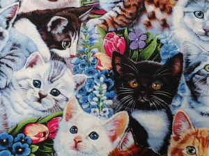 many breeds of kittens and flowers