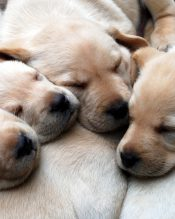 Dog welcome for free at Peak Holidays cottages