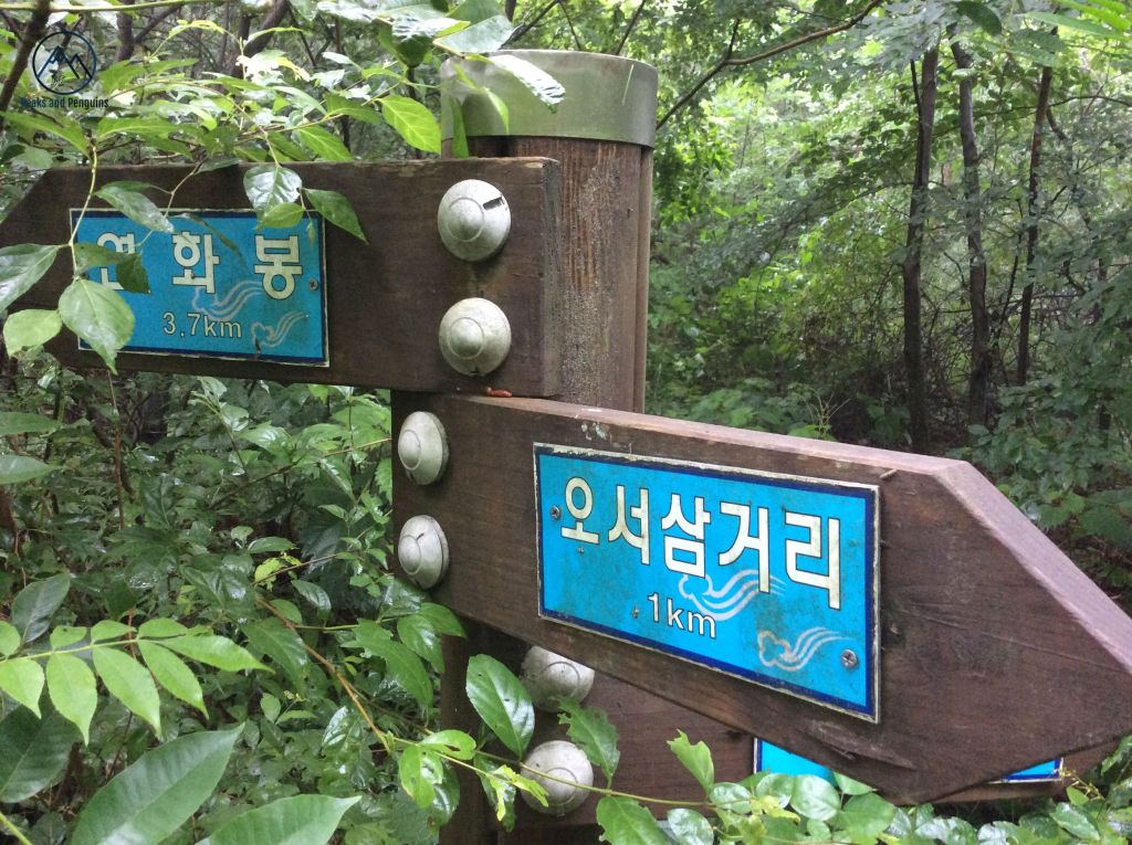 An image of a directional signpost almost completely engulfed in greenery. Vines and branches wrap around the central pole and curl over the signs. But one of the signs reads 3.7km towards Yeonhwabong, reassuring the author and her husband that they are on track.