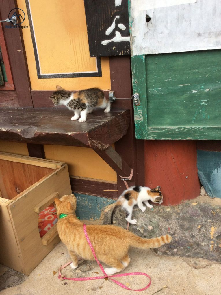 An image of an orange adult cat and patchy kittens. None of the three are looking at the camera. Instead, all three clamber around the rocks and benches outside a temple building.