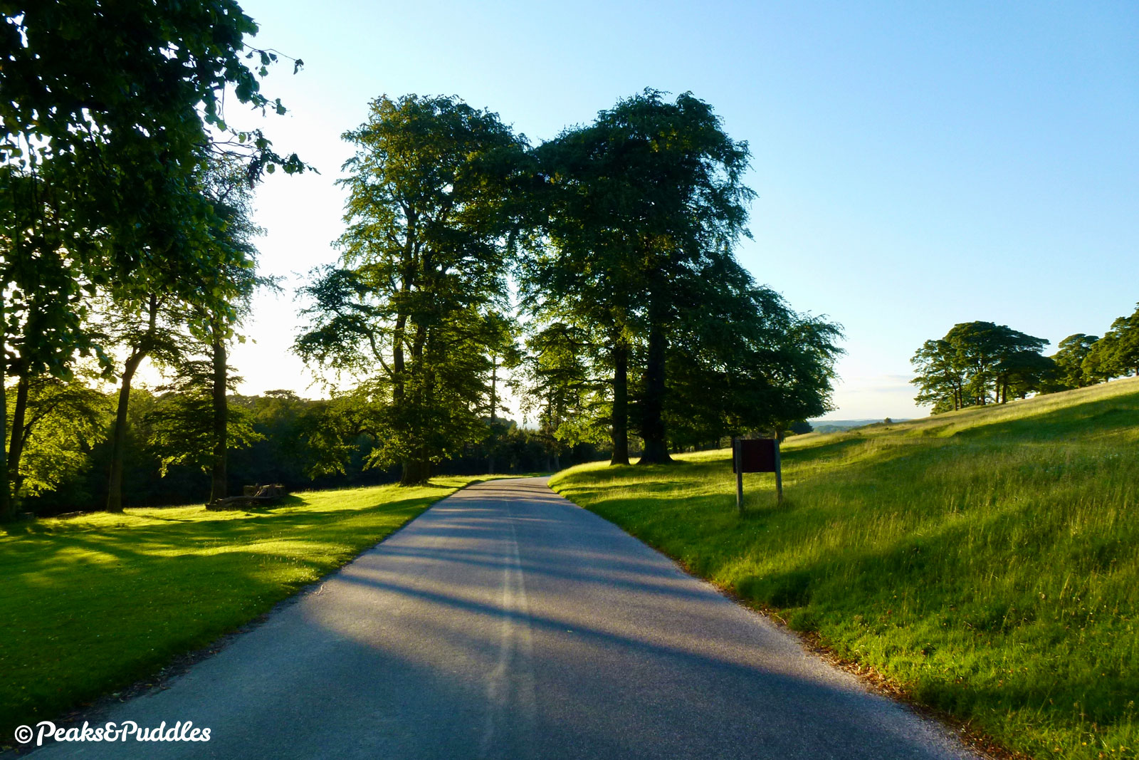 The start of the graceful mile-long descent of Lyme Park Drive, with sunlight streaming through the trees.