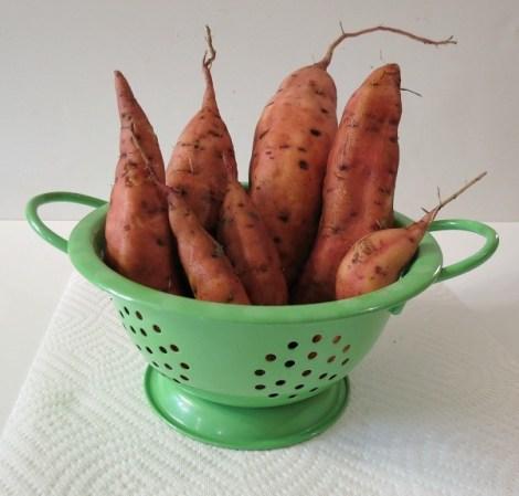 sweet potato 003