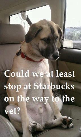 Starbucks Dog