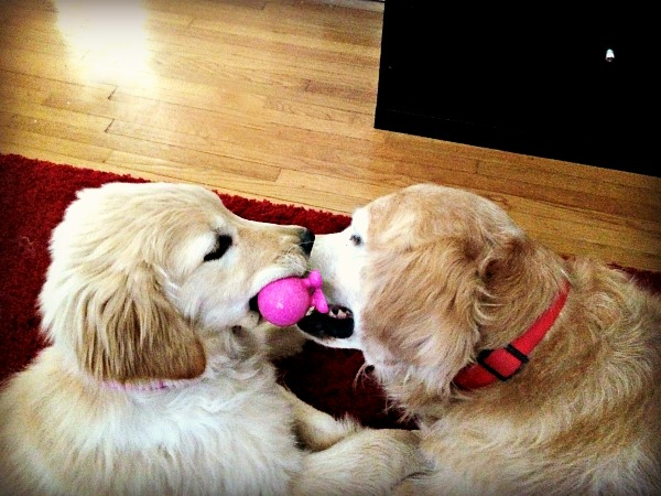 Sullie and Zoey Pink Ball