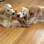 My Yoga Dogs + What I Bought at Whole Foods