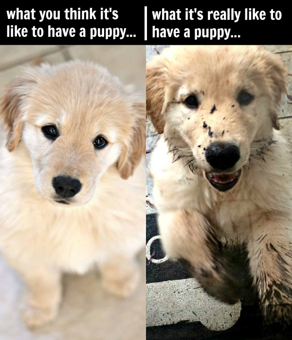 10 Tips for Raising a Puppy