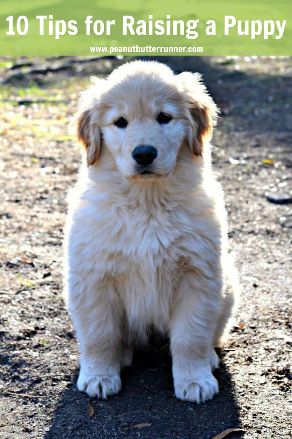 10 tips for raising a well-rounded puppy and advice for surviving the puppy phase.