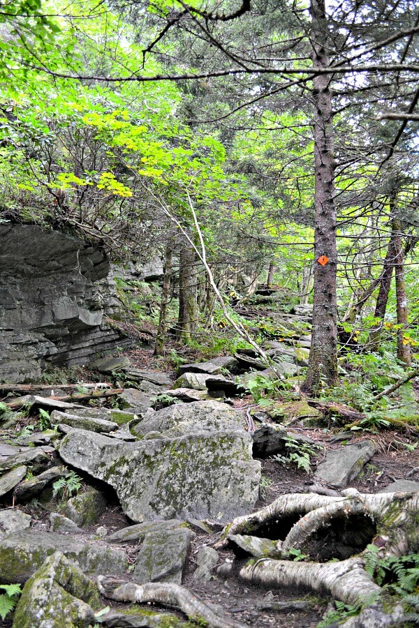 Rocky Section of the Profile Trail on Grandfather Mountain