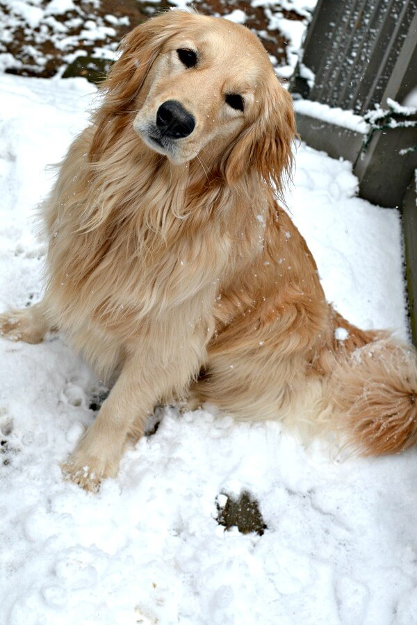 zoey in the snow