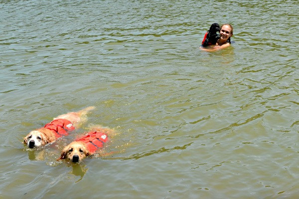lake wylie dog swim