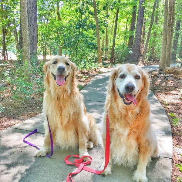 charlotte dog walk
