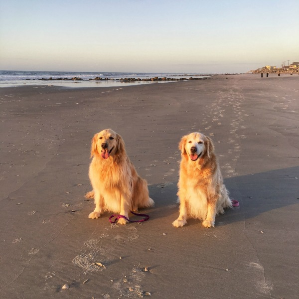 Folly Beach Dogs