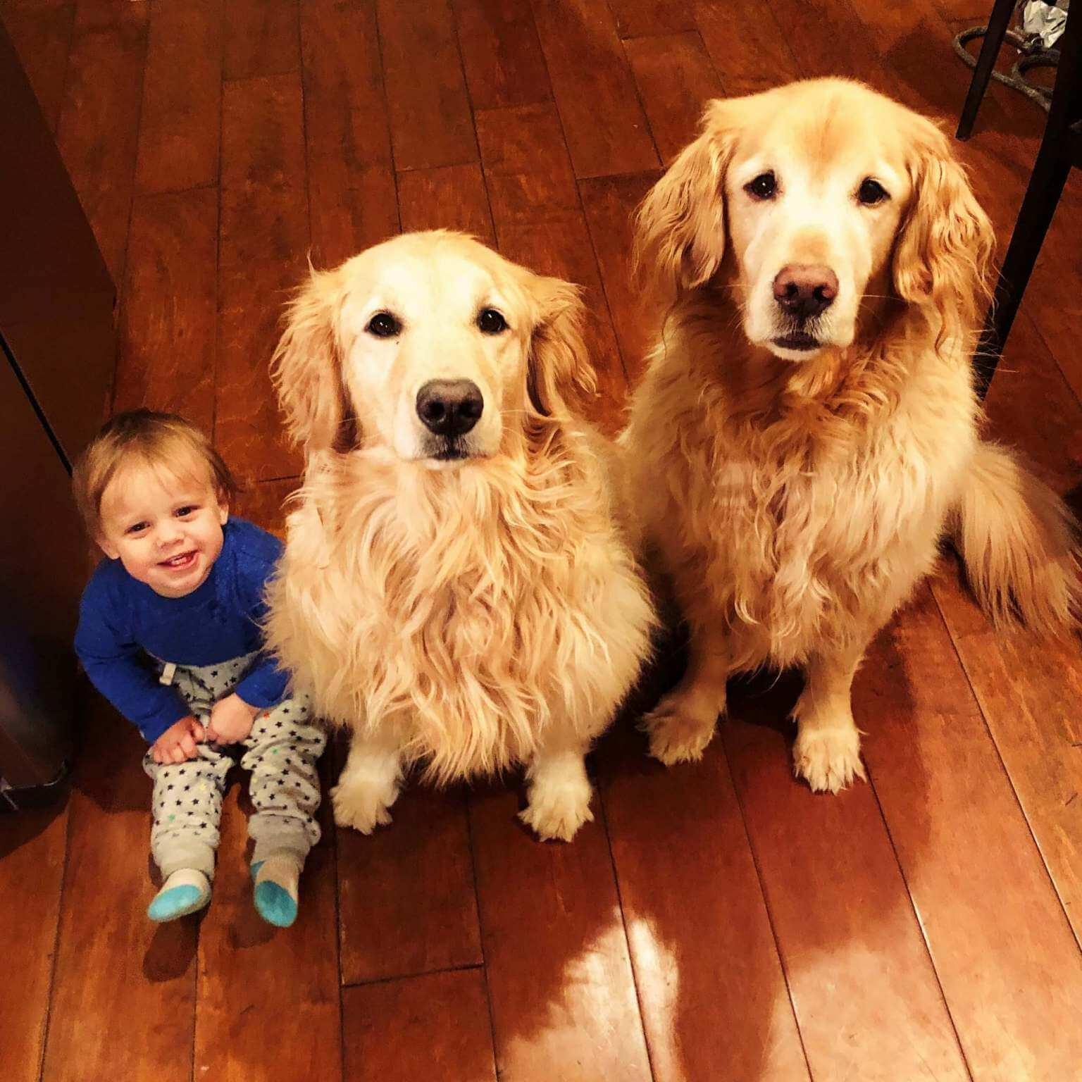 golden retrievers and baby