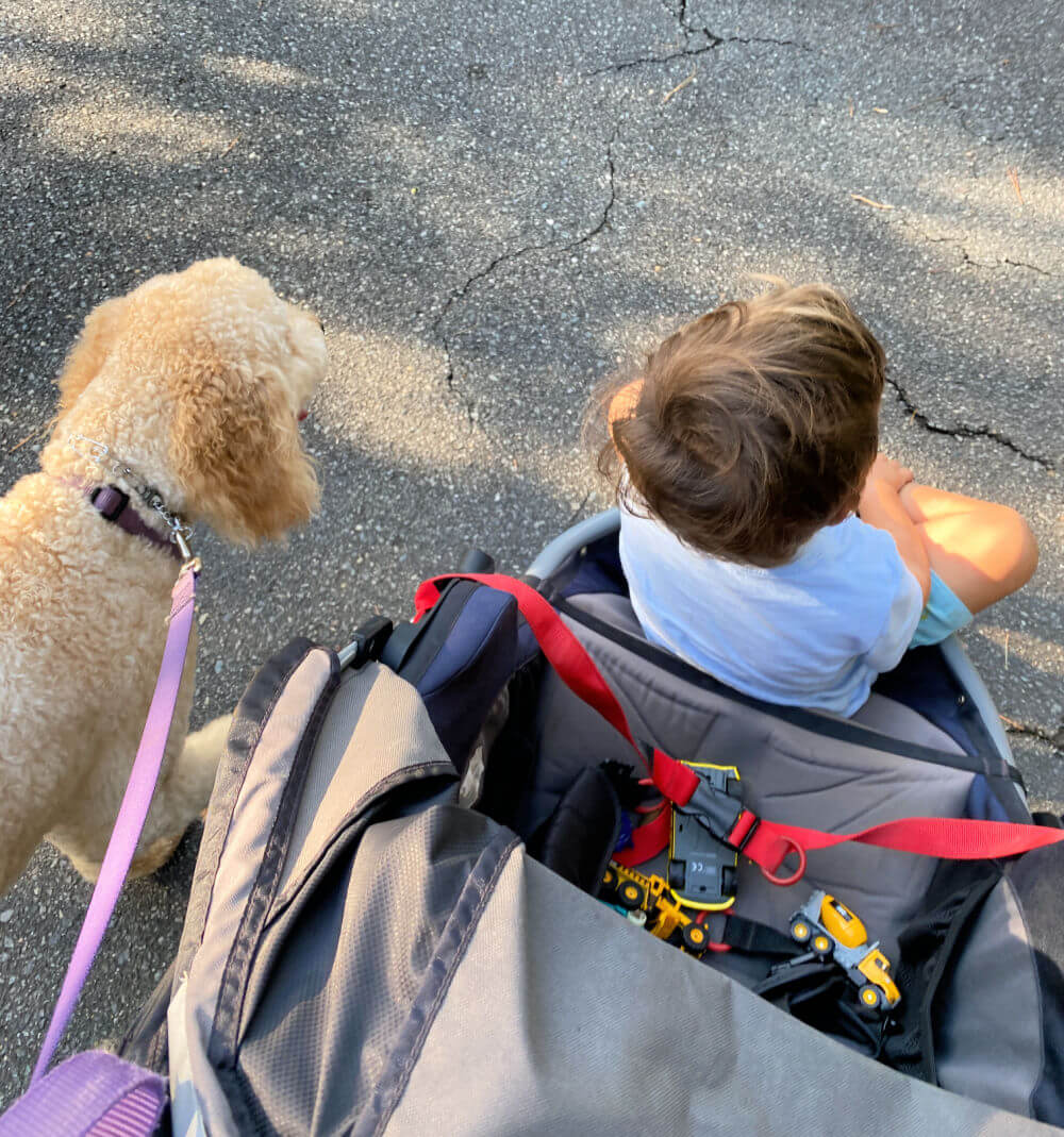 dog walking with a toddler