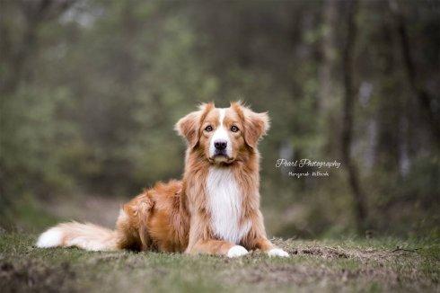 honden007