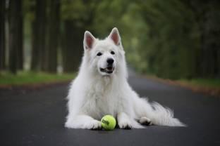 honden2012