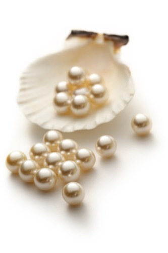 large white south sea pearls on white shell