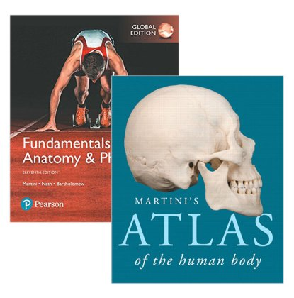 Anatomy And Physiology Textbook » Online Interactive Map Wallpapers ...