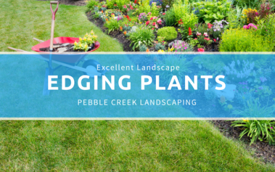 Excellent Landscape Edging Plants