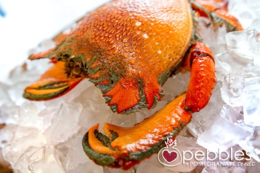fraser-isle-spanner-crabs3