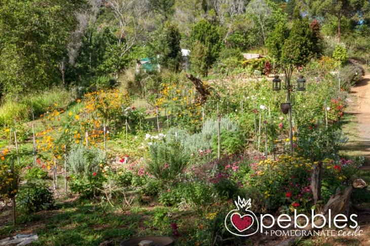 organica-floret-roses2