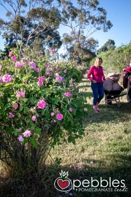 samaria-rose-farm3