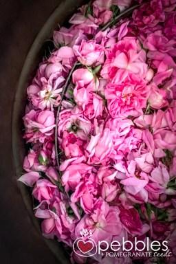 samaria-rose-farm49
