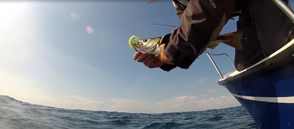La pêche du lieu au leurre souple et dur, les différentes techniques !