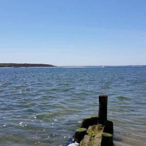 April 30, noon, Robins Island