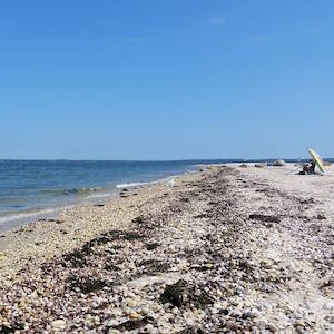 Aug. 19, 2:50 p.m., Cedar Beach, Southold