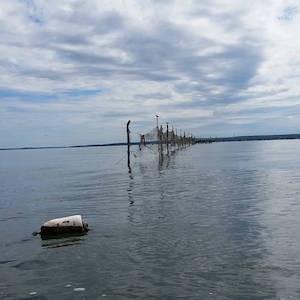 Aug. 18, 11 a.m., Robins Island pound traps