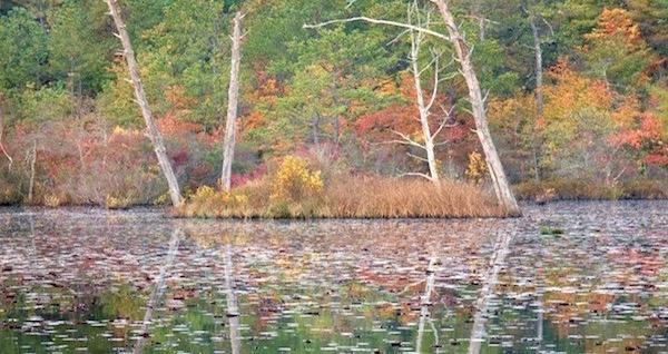 East Hampton's Northwest Woods