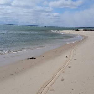 March 15, noon, New Suffolk Beach