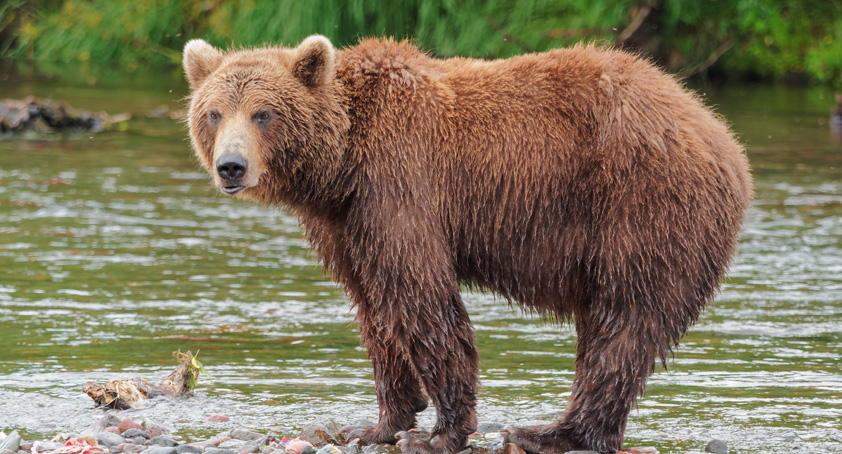 apple bear pierre ferragu