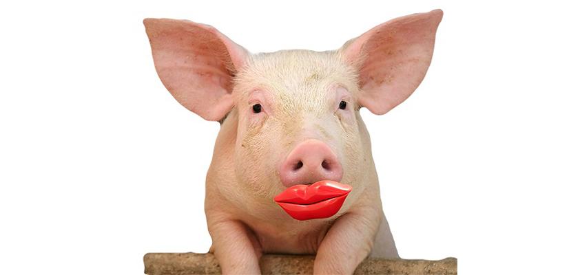 apple butterfly lipstick pig