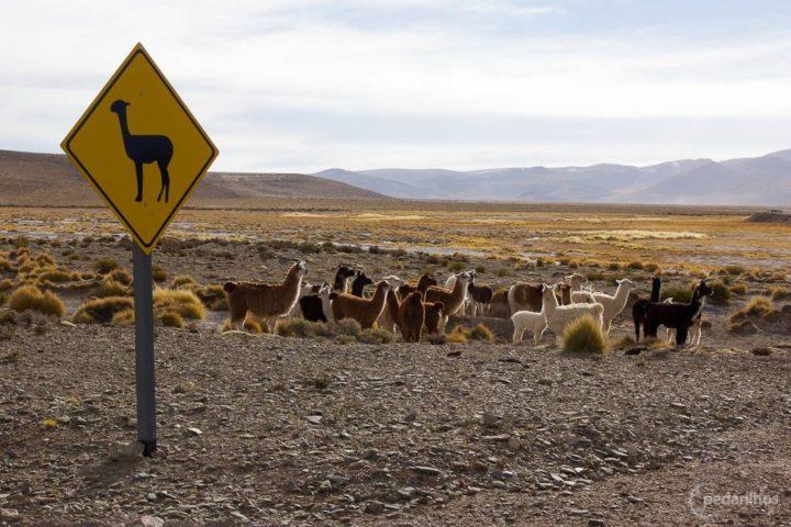 Cuidado com as Llamas