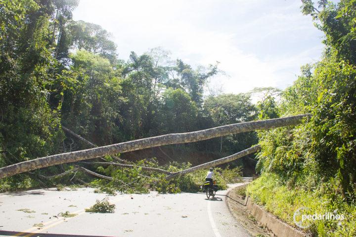 Bloqueios de árvores derrubadas no protesto de mineiros no Peru
