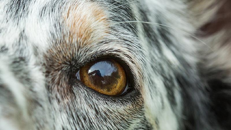 Cleaning Your Dog S Face And Eyes