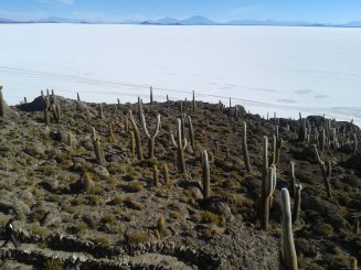 BOLIVIA Salar de Uyuni Incahuasi - Qué hacer en BOLIVIA⛲