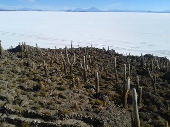 BOLIVIA Salar de Uyuni Incahuasi