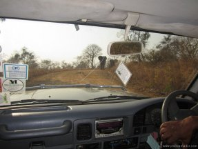 TANZANIA-Jeep elefantas