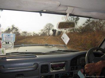 Como son las elefantes desde un safari en Tanzania