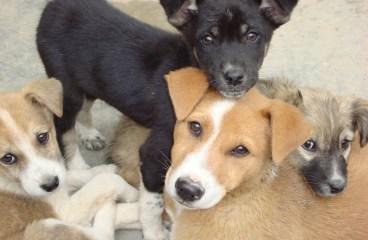 Centru de terapie cu animale fara stapan