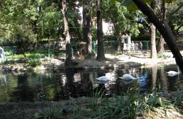 Parcurile Bucureştiului: Farmecul englezesc al Grădinii Cişmigiu